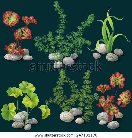 different kinds of algae and