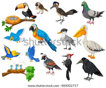 different kinds of birds set