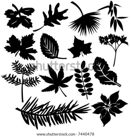 Different Leafs - Vector Illustration