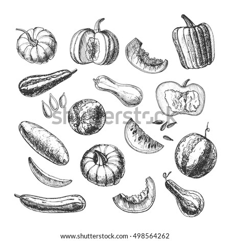 Different melon drawn by hand. Vector image. #498564262