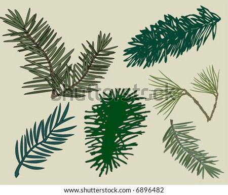 Different Pine Branches