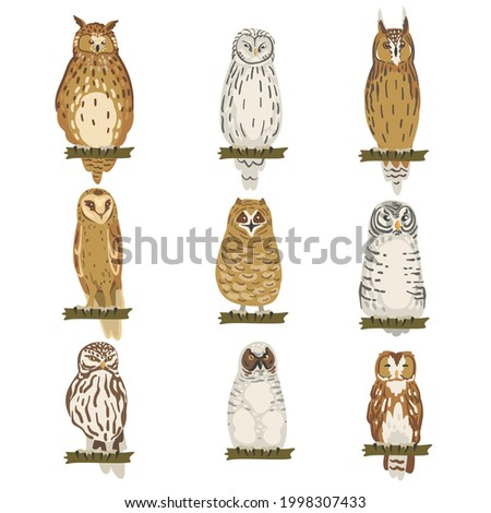 Different Specie of Owl as Nocturnal Bird of Prey with Hawk-like Beak and Forward-facing Eyes Perching on Tree Branch Vector Set Сток-фото ©