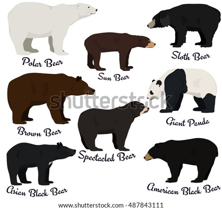 different species of bears