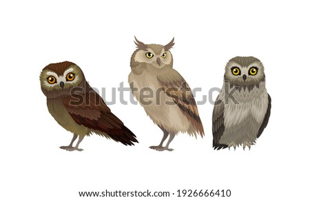 Different Species of Owls as Nocturnal Birds of Prey with Hawk-like Beak and Forward-facing Eyes Vector Set Stockfoto ©