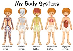Different system in human illustration