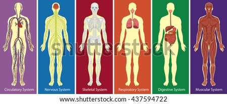 different systems of human body