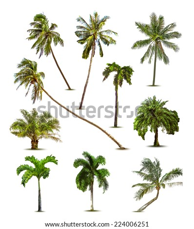 Different tropical palm trees Vector