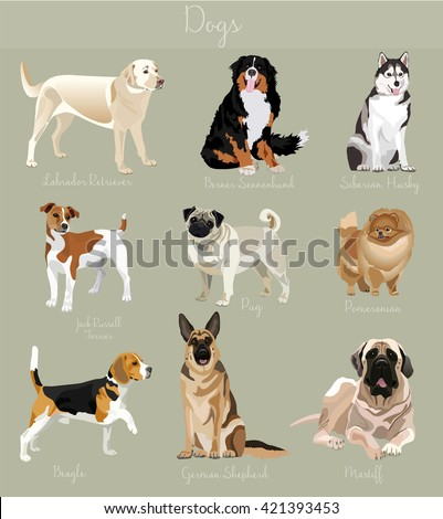 Different type of dogs set. Big and small animals. Dogs set, Dogs collection, Dogs illustration, Dogs vector image, Dogs characters, Dog friend, Dog friendly, Dogs cartoon, Dog animal, Dog home pet