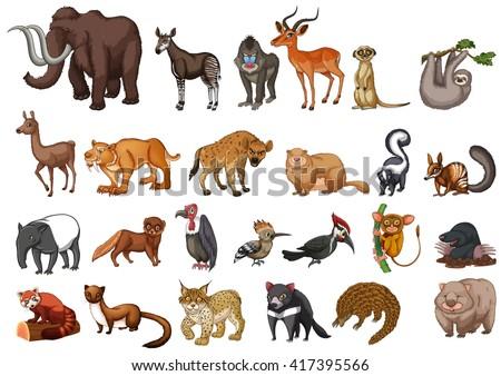 Different type of wild animals on white illustration