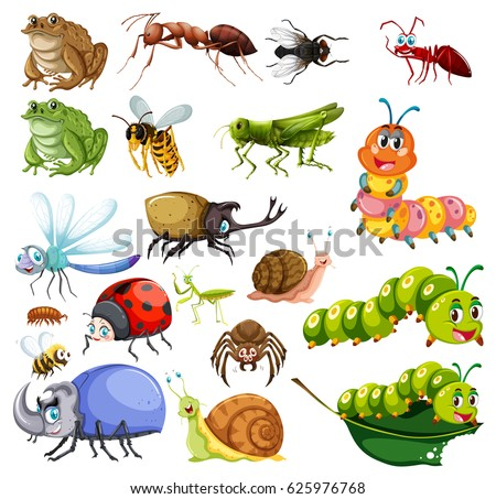 different types of insects...