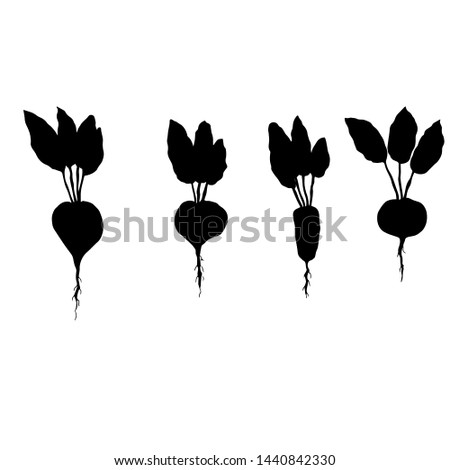 Different varieties of beets. Silhouettes. Vector illustration.