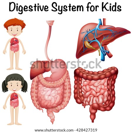 Digestive system for kids illustration
