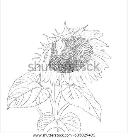 digital vector sunflower close