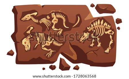 Dinosaur fossil bones, dino skeletons in piece of stone isolated on white background. Old dead prehistoric animals of jurassic ages. Paleontology, archaeology science items Cartoon vector illustration stock photo