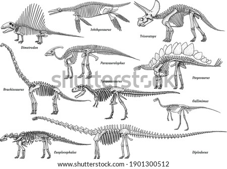 Dinosaur skeleton collection, illustration, drawing, engraving, ink, line art, vector Foto stock ©