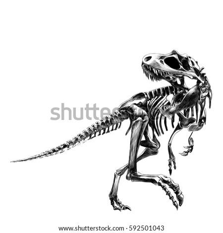 dinosaur skeleton tyrannosaurus