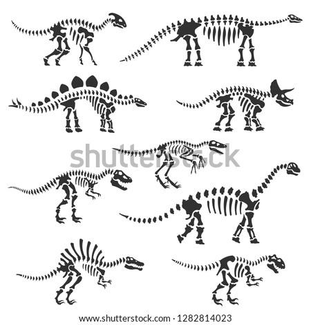 Dinosaur skeletons set. Dinosaur bones silhouettes, isolated objects. Velociraptor, Diplodocus, Triceratops, Tyrannosaurus, etc. Vector illustration