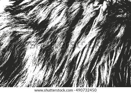 Fur Brushes - Samples - Free Photoshop Brushes at Brusheezy!