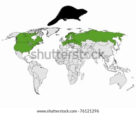 Distribution beaver