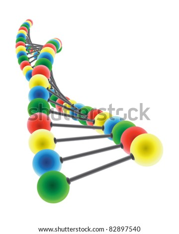 DNA model on the white background - stock vector