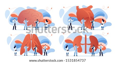 Doctor and human internal organ set. Anatomy concept. Brain, heart, lungs and kidneys. Therapist make diagnosis. anatomical and medical inner organs disease treatment. Pharmacy research system