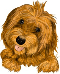 dog Affenpincher Briar brown vector illustration
