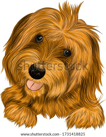 dog Affenpincher Briar brown vector illustration stock photo
