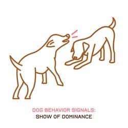 Dog behavior icon. Domestic animal or pet language. Dominant labrador. Aggressive reaction. Bad signal. Simple icon, symbol, sign. Editable vector illustration isolated on white background