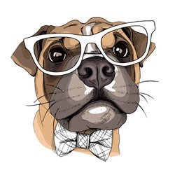 Dog Boxer in a glasses and with a bow tie. Vector illustration.