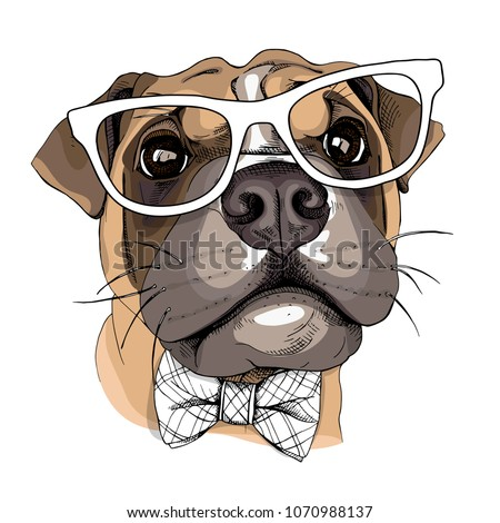dog boxer in a glasses and with ...