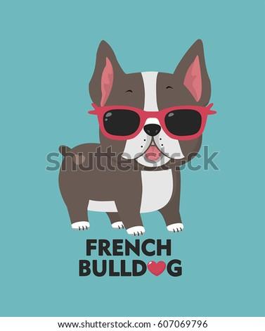 dog breed french bulldog a
