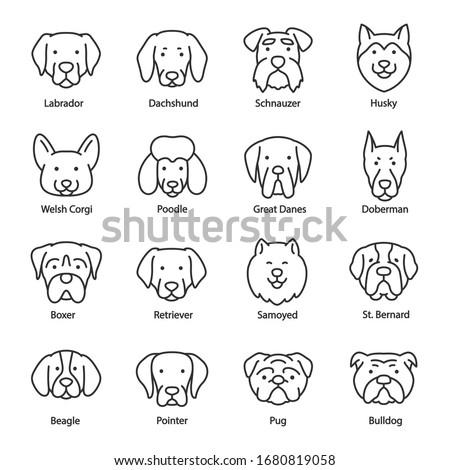 Dog breed, icon set. Heads with titles, linear icons. Labrador, Dachshund, Schnauzer, Husky, Corgi, Poodle, Pointer, etc. Line with editable stroke ストックフォト ©