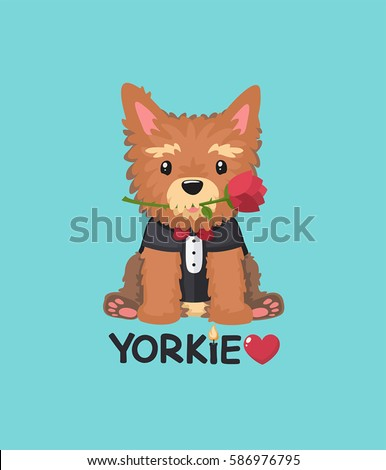 Dog breed Yorkshire Terrier. Puppy in a black coat and red tie. Puppy holding a red rose. Text: Love Yorkie