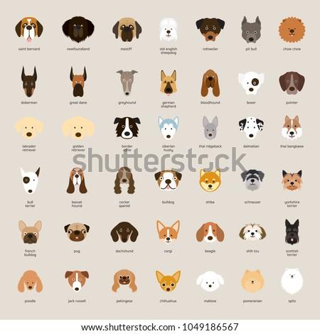 Dog Breeds, Head Set, Front View, Vector Illustration ストックフォト ©