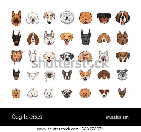 dog breeds  muzzle set