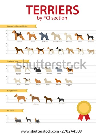dog breeds terriers by fco