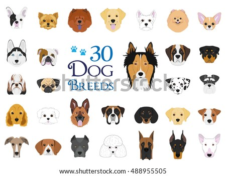 dog breeds vector collection