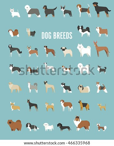 dog breeds vector illustration