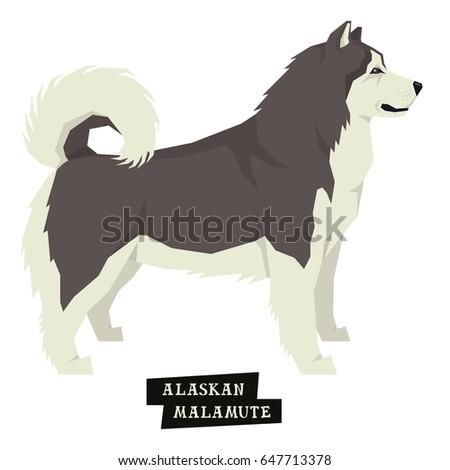 dog collection alaskan malamute