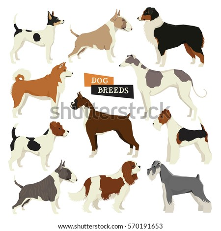 Dog collection. Vector set of 11 dog breeds. Geometric style icon round