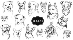Dog face hand drawn set. Vector animal illustration isolated on white