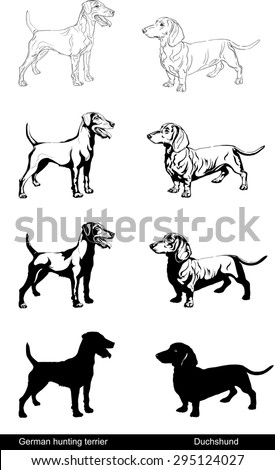 Dog, German hunting terrier, Duchshund