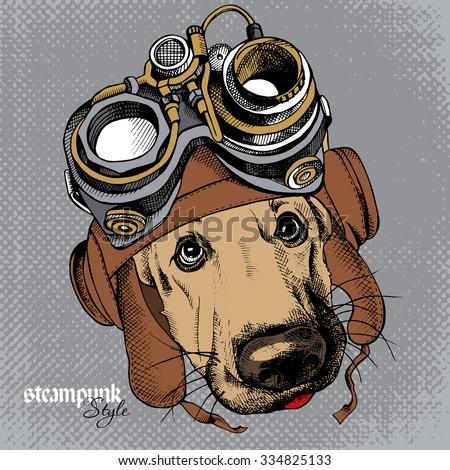 dog german shepherd portrait in