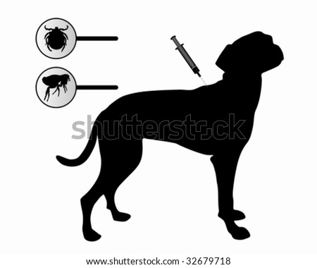 Dog gets an inoculation against fleas and ticks on white