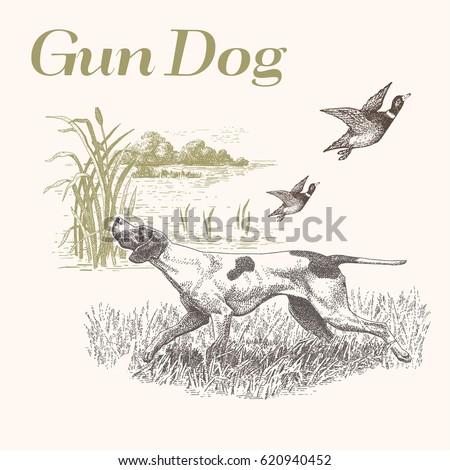 dog hunting gun dog isolated
