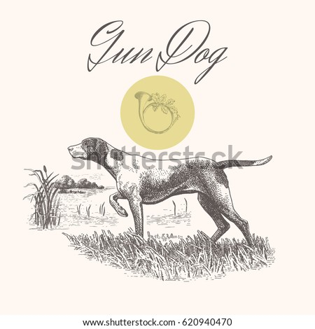 dog hunting gun dog isolated