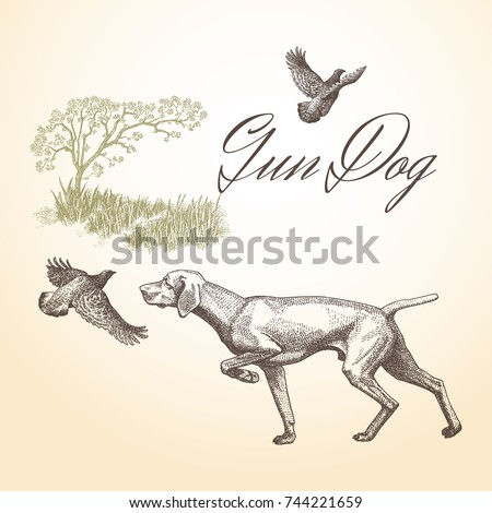 Dog. Hunting. Gun dog isolated vector engraved illustration with landscape background