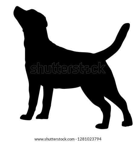 Dog Labrador Retriever breed on a white background. Silhouette. Vector illustration Zdjęcia stock ©