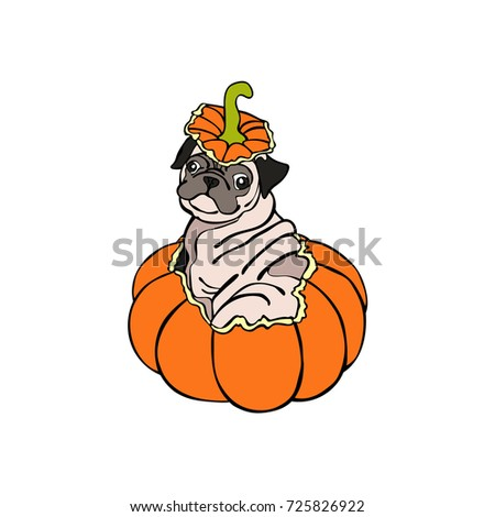 Dog. Puppy Pug. Halloween pumpkin. Isolated vector object on white background.
