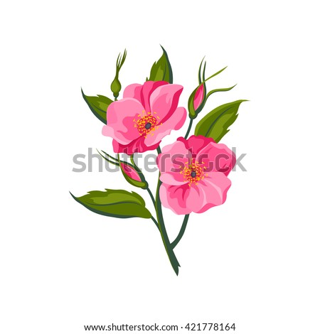 dog rose hand drawn realistic